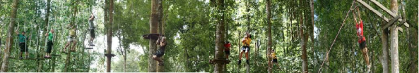 bali tree top adventure by bali activities