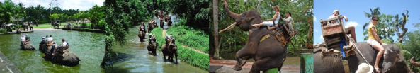 bali elephant tours by activities tours