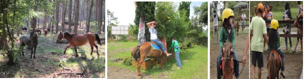 bali horse riding tours with bali local tour guide