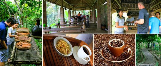 coffee-plantation.jpg