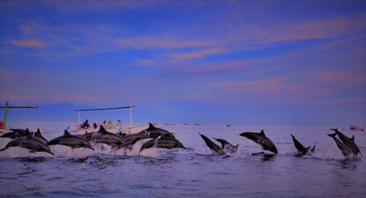 dolphin tour.jpg