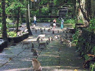 monkey forest 2.jpg