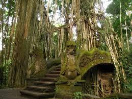 monkey forest.jpg