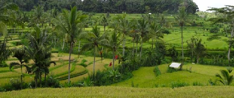 munduk-village-bali